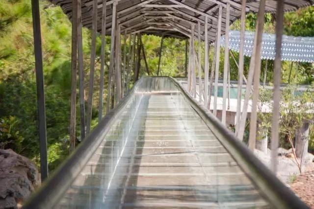 """周末嗨起来!广东11个""""网红""""玻璃桥打卡点推荐东莞有2个…(图2)"""