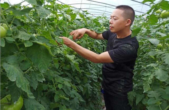 让番茄回味无穷的人,成都市回味蔬菜种植专业合作社理事长方毅