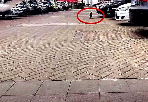 男子刚到小区停车场,流浪狗直奔冲了过来,低头一看欣慰的笑了