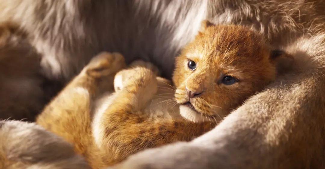 琪琪色撸影院_狮子王丨7月12日,一起影院撸大猫.