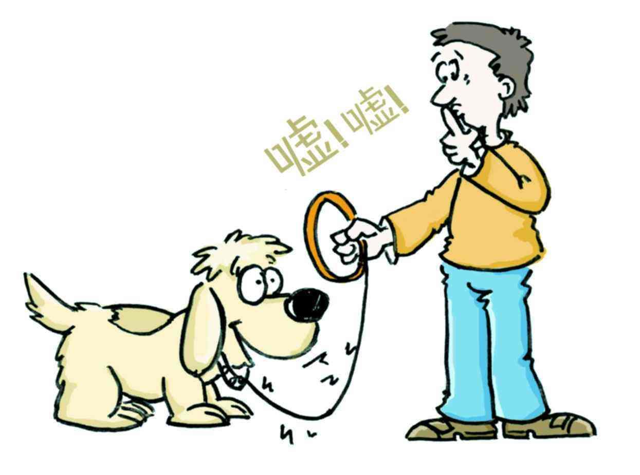 多措并举,桥梓镇大力开展文明养犬工作