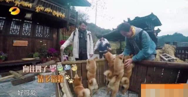 """《向往》收官,小锅被张子枫给带回家了,只有""""瓢哥""""没人要"""
