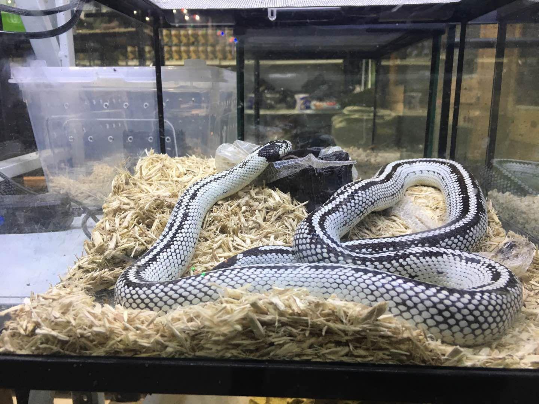 2000元巨蜥与10年刑期 爬宠圈商机背后涉法之争
