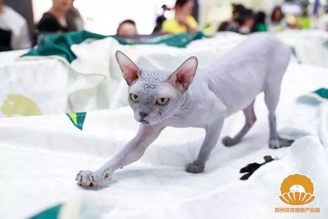 琪琪色撸影院_把猫,撸猫,吸猫 | 用一场宠物展满足你对猫所有的好奇
