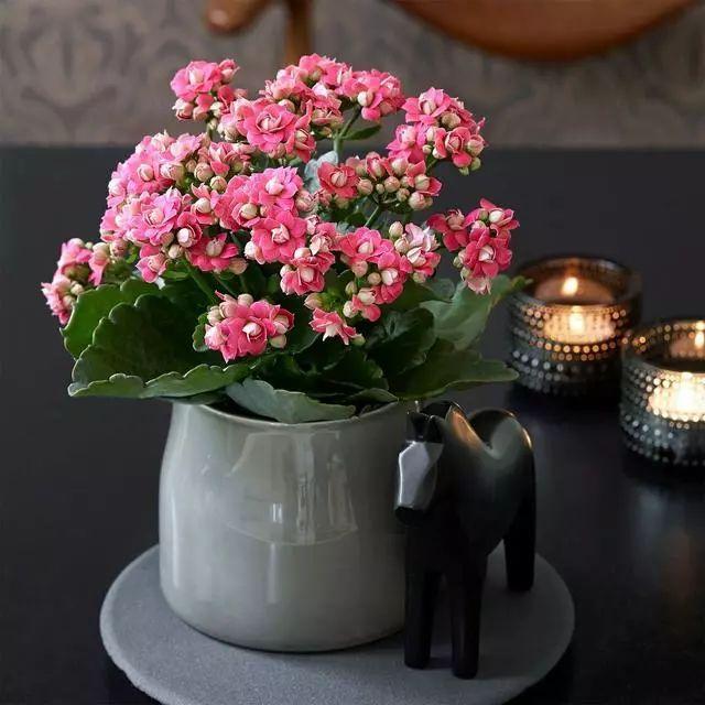 养花时怎样选择花盆的大小和深浅?教你在养花路上少走