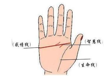 男人手相 男人的左手手纹解析   男人手相   易德轩网