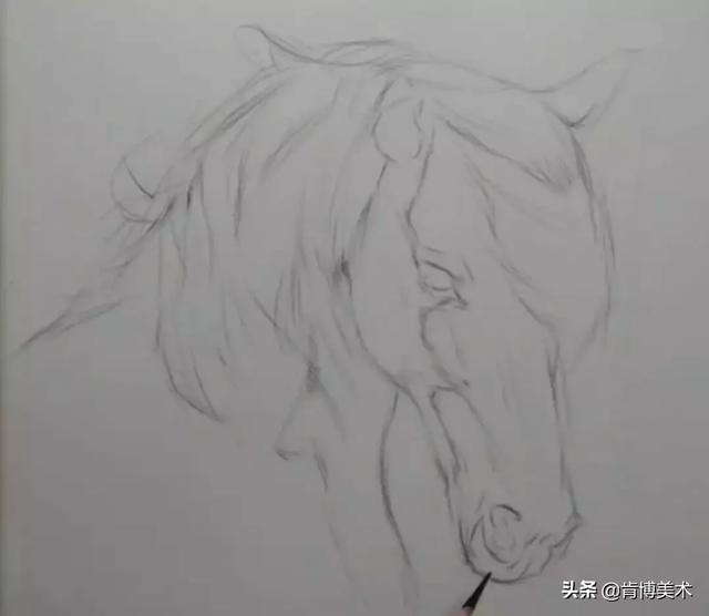 动物素描步骤教程,学会这几点,初学者也觉得绘画很简单图片