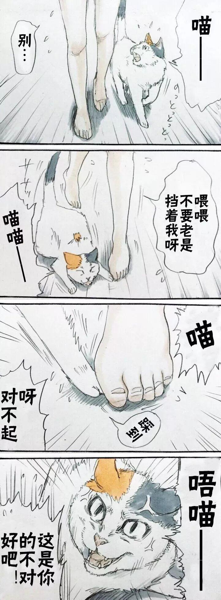 日本推主以漫画形式展现了猫与主人的日常,网友:太真实了