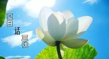 京东白条套现服务三伏地艾灸最谢适冬病夏乱的六种症状