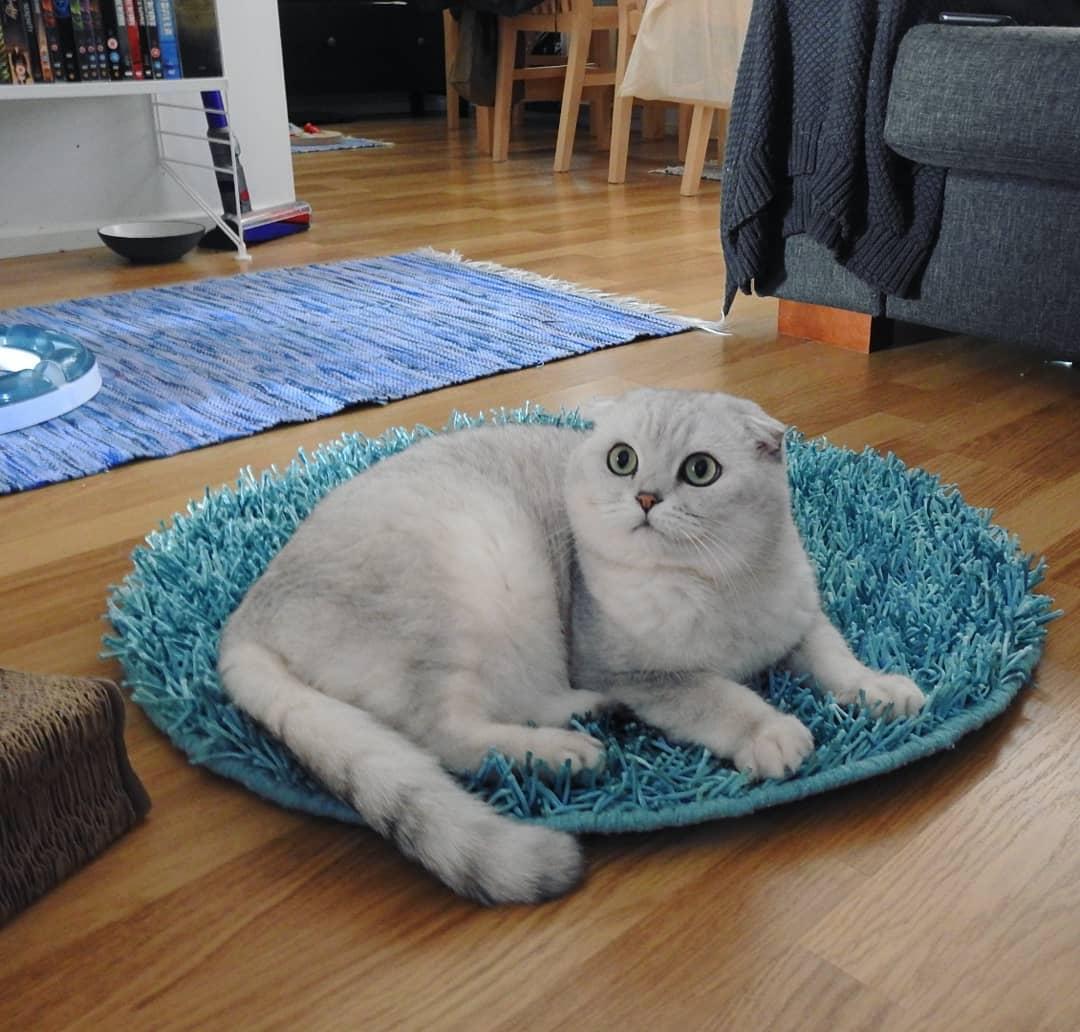 猫咪造影图片