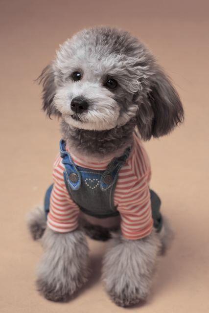 为什【早教书籍】么要给狗狗喝羊奶粉,狗狗喝羊奶粉不得不知的3点好处!