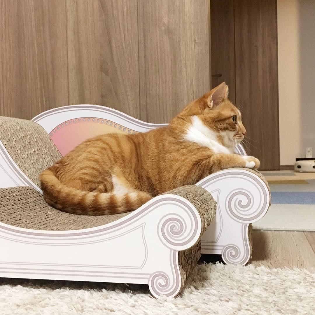 猫咪钡餐图片