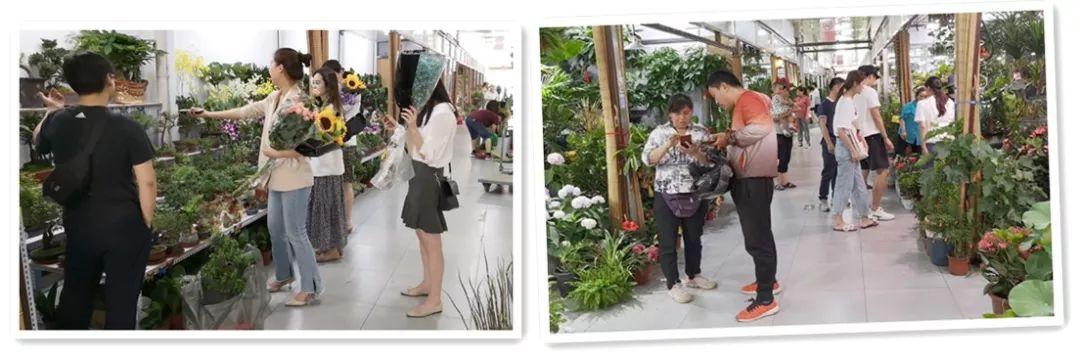 转角,遇到美――盛华宏林绿植厅商户们的心里话