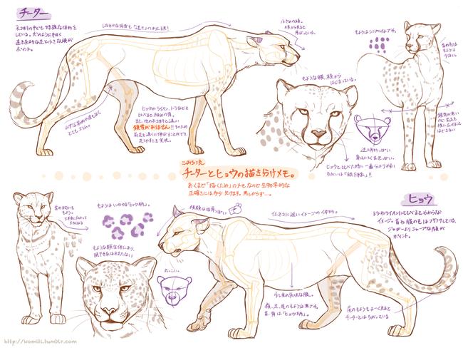 狐狸的画法   这个是什么动物老师也不是很清楚,应该是幻想出来的生物独角兽的画法   狗的画法   羊的画法,羊的画法非常简单   接下来是狮子的画法   豹的画法