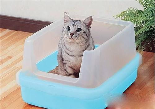 猫咪为什么突然不排尿了图片