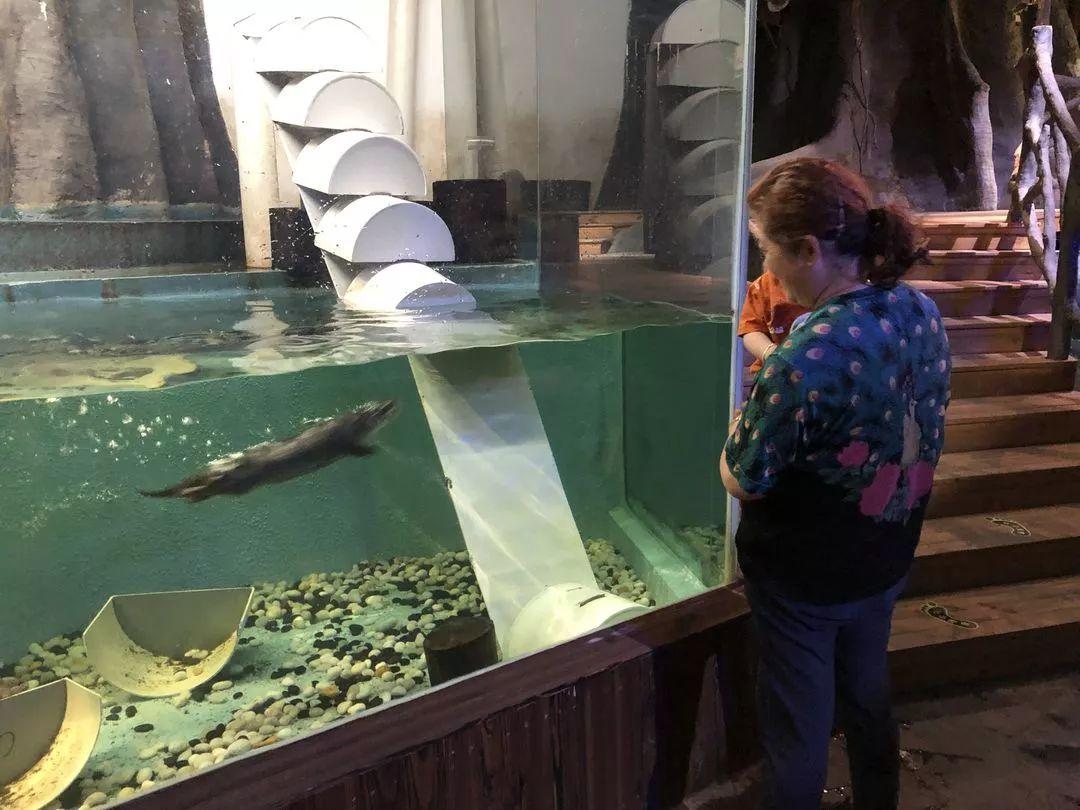 """到""""热带雨林""""看远古鱼类、去""""大海""""亲密接触海洋生物…杭州新晋带娃地还不错哎!"""