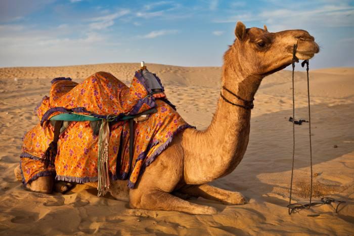 """动物园发现一只""""无头骆驼"""",当它转过身的那一刻,才知道原因!(图1)"""