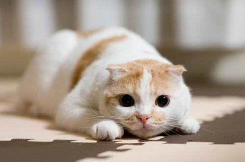 猫咪不排尿的原因分析图片