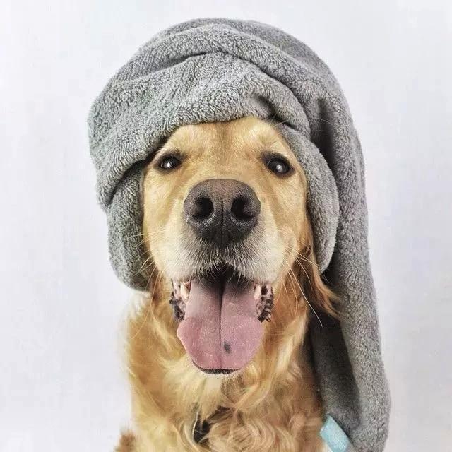 国外摄影师手把手教你,如何把自家狗子拍成高富帅!