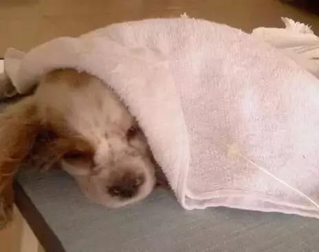 【圣宠小课堂】狗狗呕吐、腹泻的原因和预防,你都了解吗