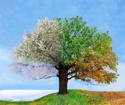 梦见树有什么意义