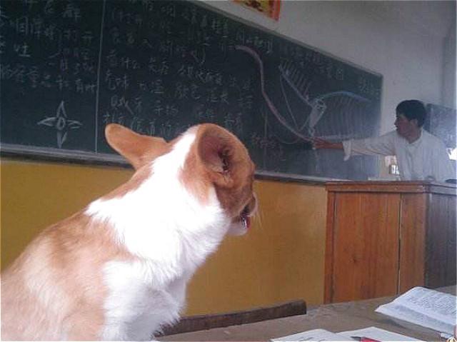 大学流浪狗继蹭课后又开始蹭新生军训,欲成为文武双全的学霸犬