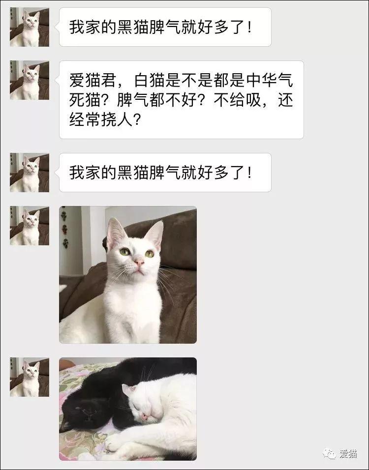 为什么说白猫的脾气都差?