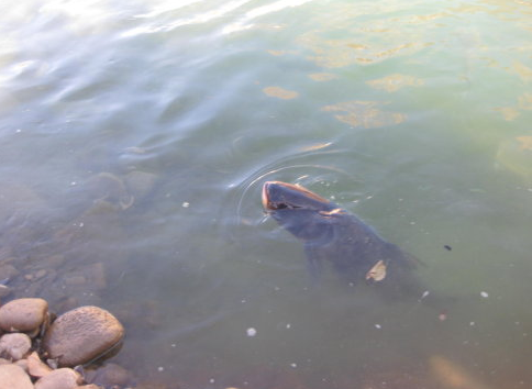 放生鱼游回来的原理_老太太放生鱼儿,刚把鱼放进水就游回来,下一幕更是让人震惊