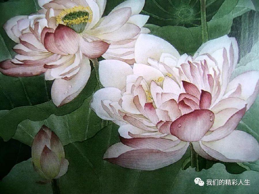 你是我心中最美的那朵莲花