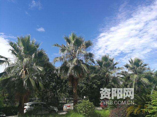 [资阳]7月7日迎来小暑节气 资阳最高气温34℃