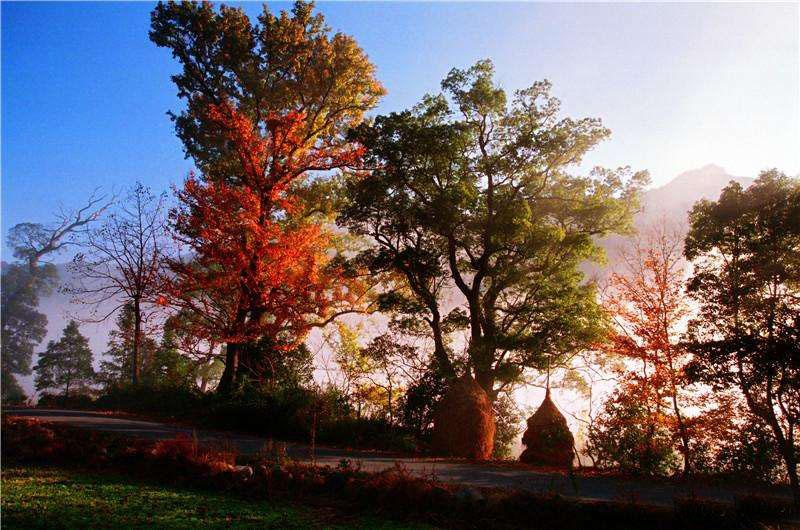 古徽州这座山中有一条唐代古徽道,是中国最早的景观大道