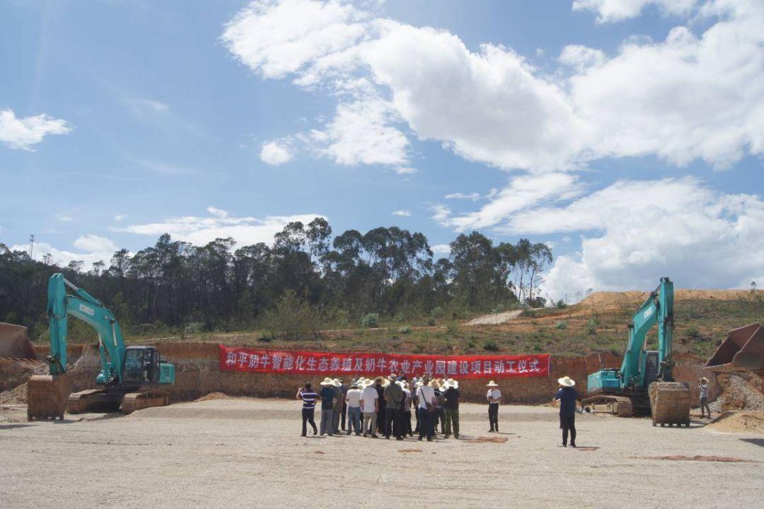 【产业发展】和平镇奶牛产业园建设项目开工