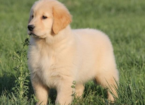 花1万买的狗狗越长越丑,商家给出理由,这次我站商家