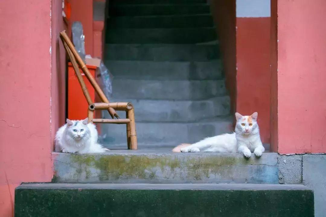 撸一撸-色五天_听说有个人早上8点跑到故宫去撸猫