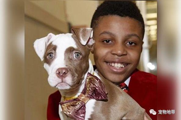 12岁的男孩制作时尚领结 帮流浪狗流浪猫找到有爱的新家
