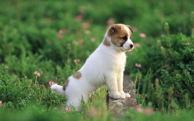 狗狗怀孕被撵出门,在马路边匆忙产子,幸遇好心人救助后母子平安