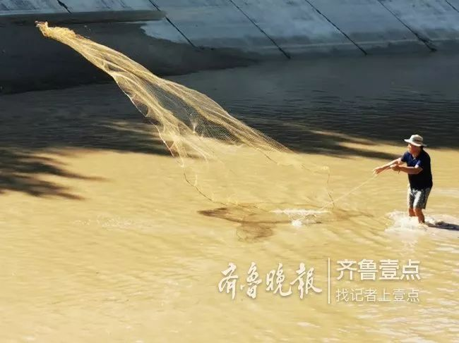 【东阿第一眼】东阿位山引黄干渠停水,捕鱼爱好者布网捕鱼