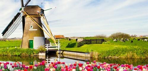 荷蘭高校申請條件大匯總:語言成績、院校背景…