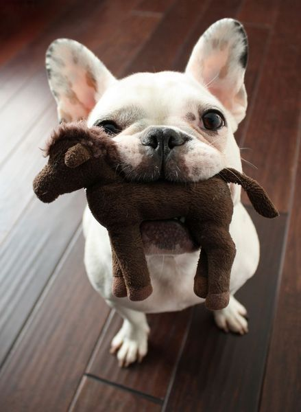 狗狗喝宠物羊奶粉好吗?狗狗喝羊奶粉都能带来哪些帮助?