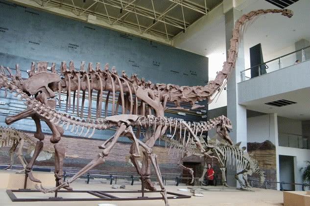 5种生物死后的骨架,大熊猫是真的丑,完全失去了生前的萌态