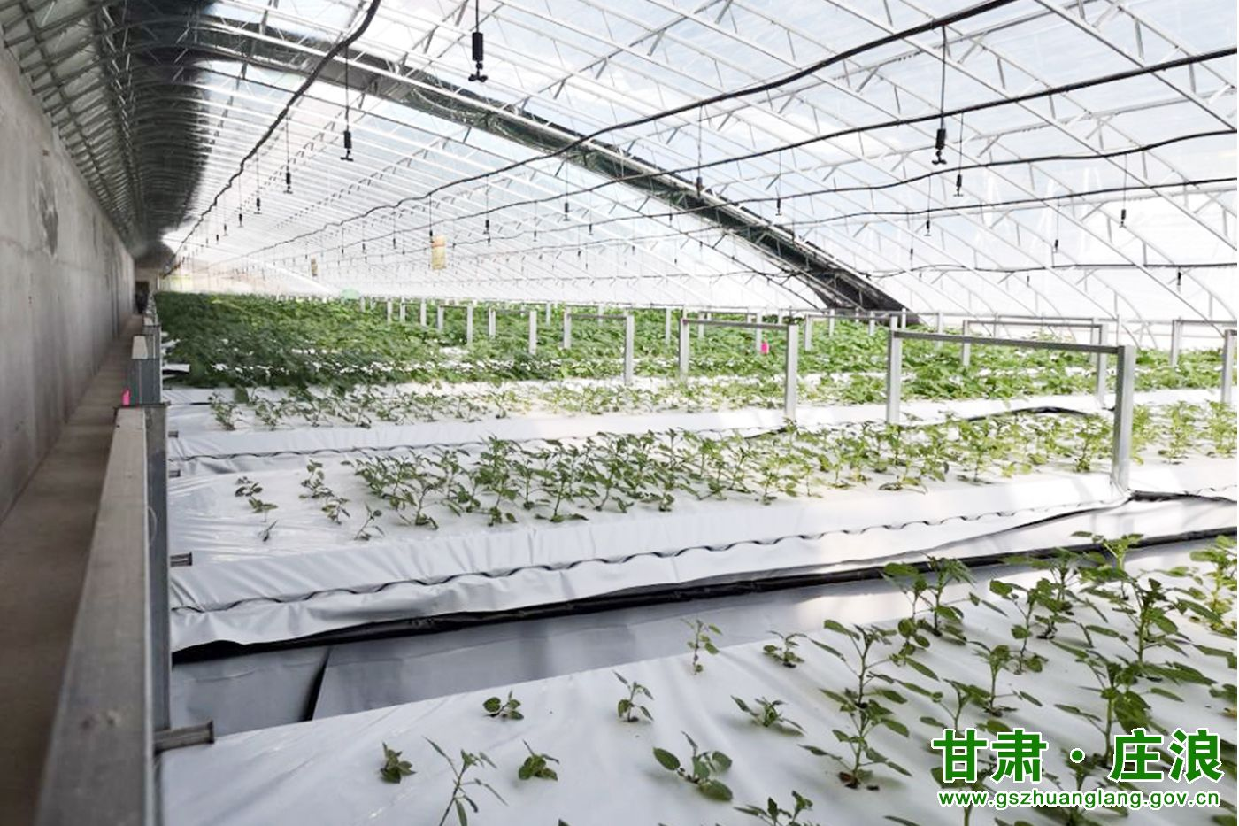 庄浪县gdp_兰洽会签约助力庄浪区域经济高质量发展