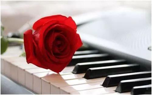 【爱读】《玫瑰人生》