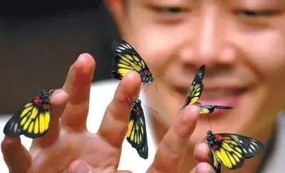 哥哥射蝴蝶谷撸炸天_满山谷的蝴蝶, 让人有种仿佛置身 大型3d灯光歌舞秀 一天的时间肯定不
