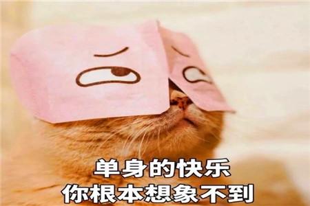 幽默笑话:一天就花了我八百大洋,这哪是小猫啊,这是个大爷!