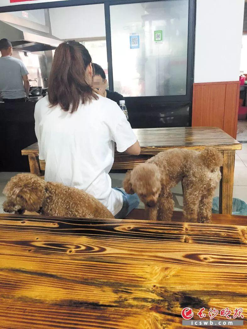 """遛狗不牵绳,市民心慌慌丨""""狗趣""""何以成""""狗患""""?"""