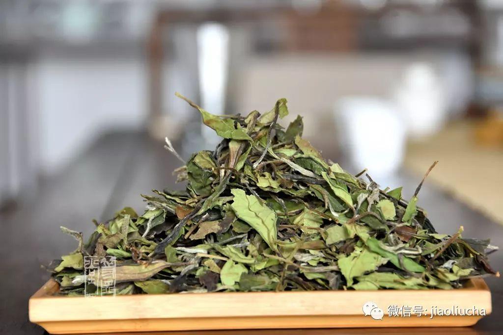 冲泡白茶春寿眉,盖碗和紫砂壶哪个更好喝?
