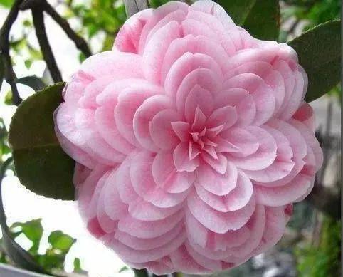奇花异卉,好漂亮!