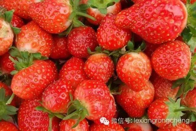 <b>即使夏天也有很多水果是催熟的!20秒看穿!</b>