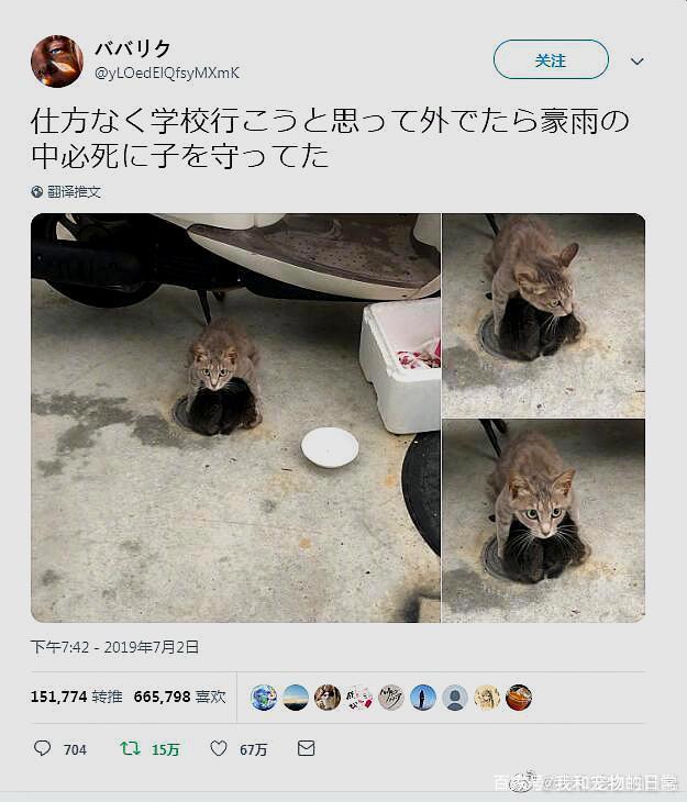 一只流浪猫在避难途中坚持给孩子们喂奶,母爱无畏,伟大!