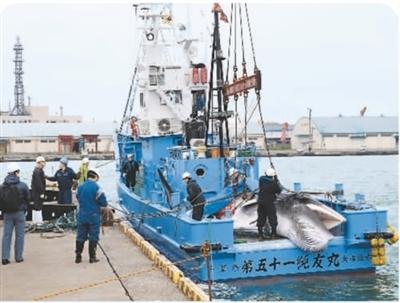 """日本为""""口腹之欲""""重启商业捕鲸"""